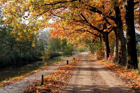 heerlijke herfst