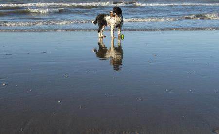 Spiegeling - 16-01-11 genomen op een prachtige middag aan de zee bij Scheveningen - foto door nelvangriet op 18-01-2011 - deze foto bevat: strand, hond