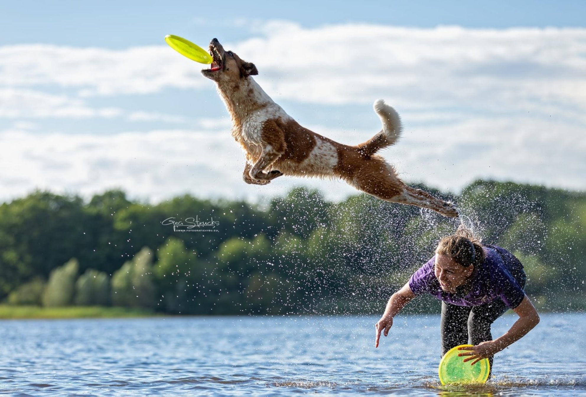 Frisbee in het water - Frisbee in het water zo zwaar voor honden. Maar deze hond maakt wr een prachtige hoge sprong van - foto door madcorona op 24-08-2020 - deze foto bevat: hond, honden, actie, frisbee, hondensport, hondenfotografie, actie fotografie, hondendotografie - Deze foto mag gebruikt worden in een Zoom.nl publicatie