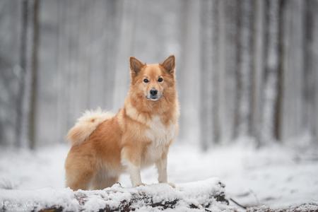Sneeuw - Bry geniet van de sneeuw! - foto door MarleenVerheulFotografie op 17-01-2021 - deze foto bevat: dieren, huisdier, hond, hondenfotografie, hondenfotograaf
