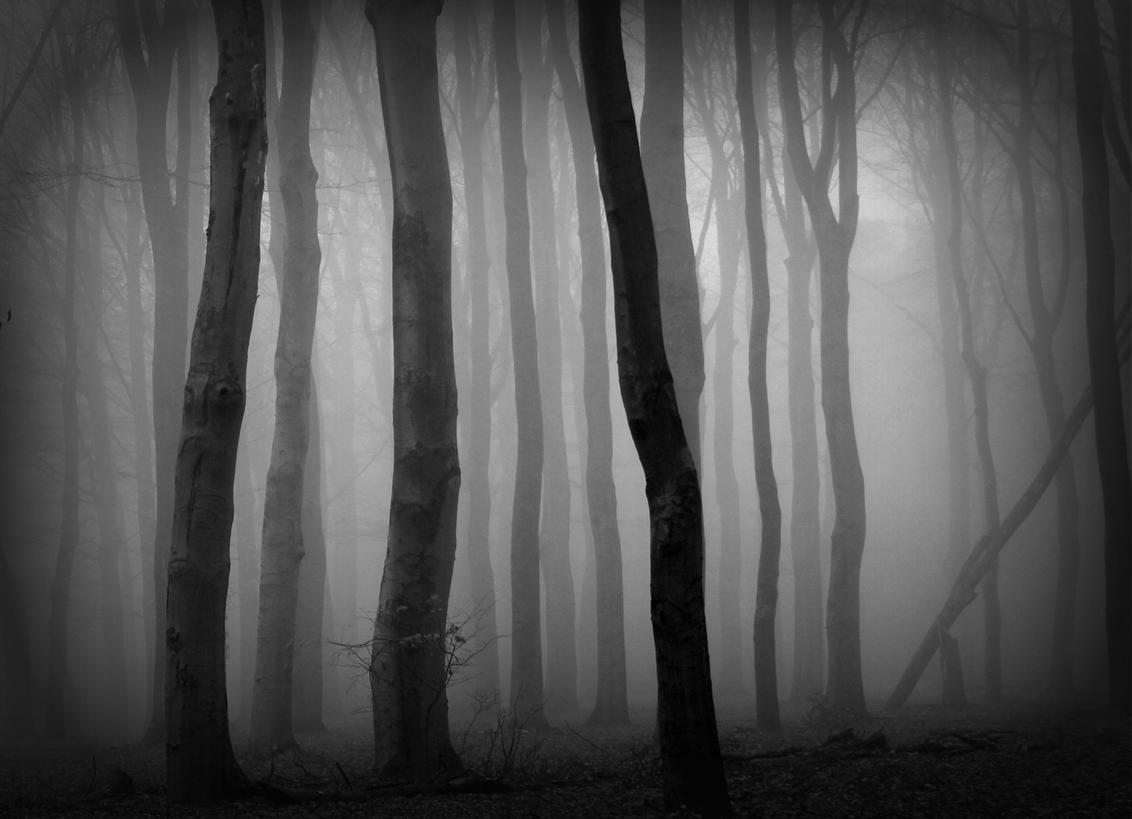 Mystic - in het beukenbos  gr Joke - foto door jokebr op 24-10-2020 - deze foto bevat: herfst, mist, bos, mystic