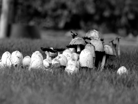 zwart wit cursusopdrachten