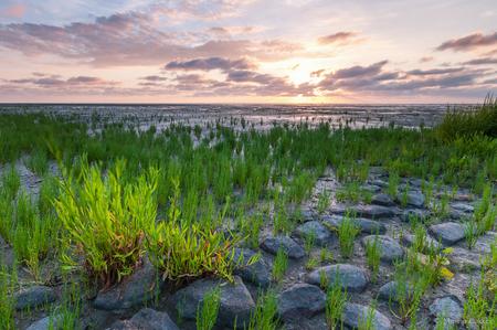 """Koehool - De zon lichte hier het """"zeekraal"""" prachtig op.  Ik weet niet zeker of dit zeekraal betreft mocht iemand de benaming weten hoor ik het graag. - foto door mjbakker20 op 24-07-2014"""