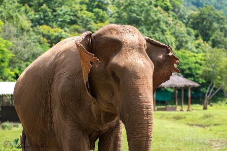 Wereld olifanten dag