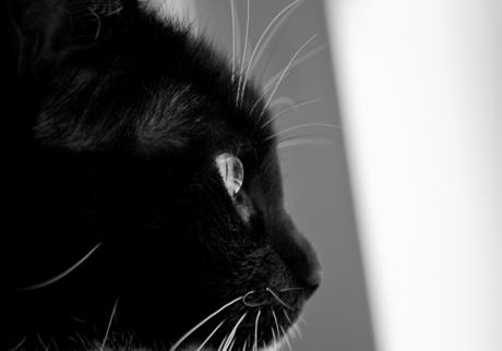 Kattenoog