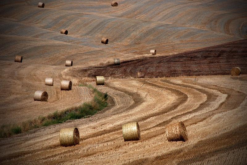 Waving - Toscane, Italie - foto door Isaatje op 24-09-2008 - deze foto bevat: toscane, italie