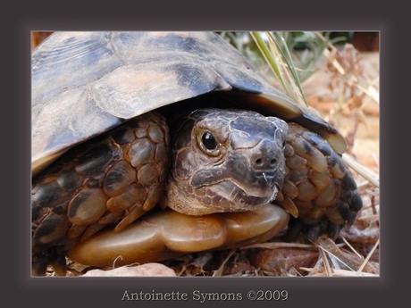 Wildlife in Greece