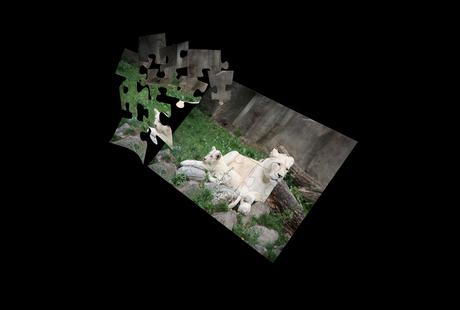 puzzel leeuwen
