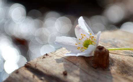 genieten van de lente