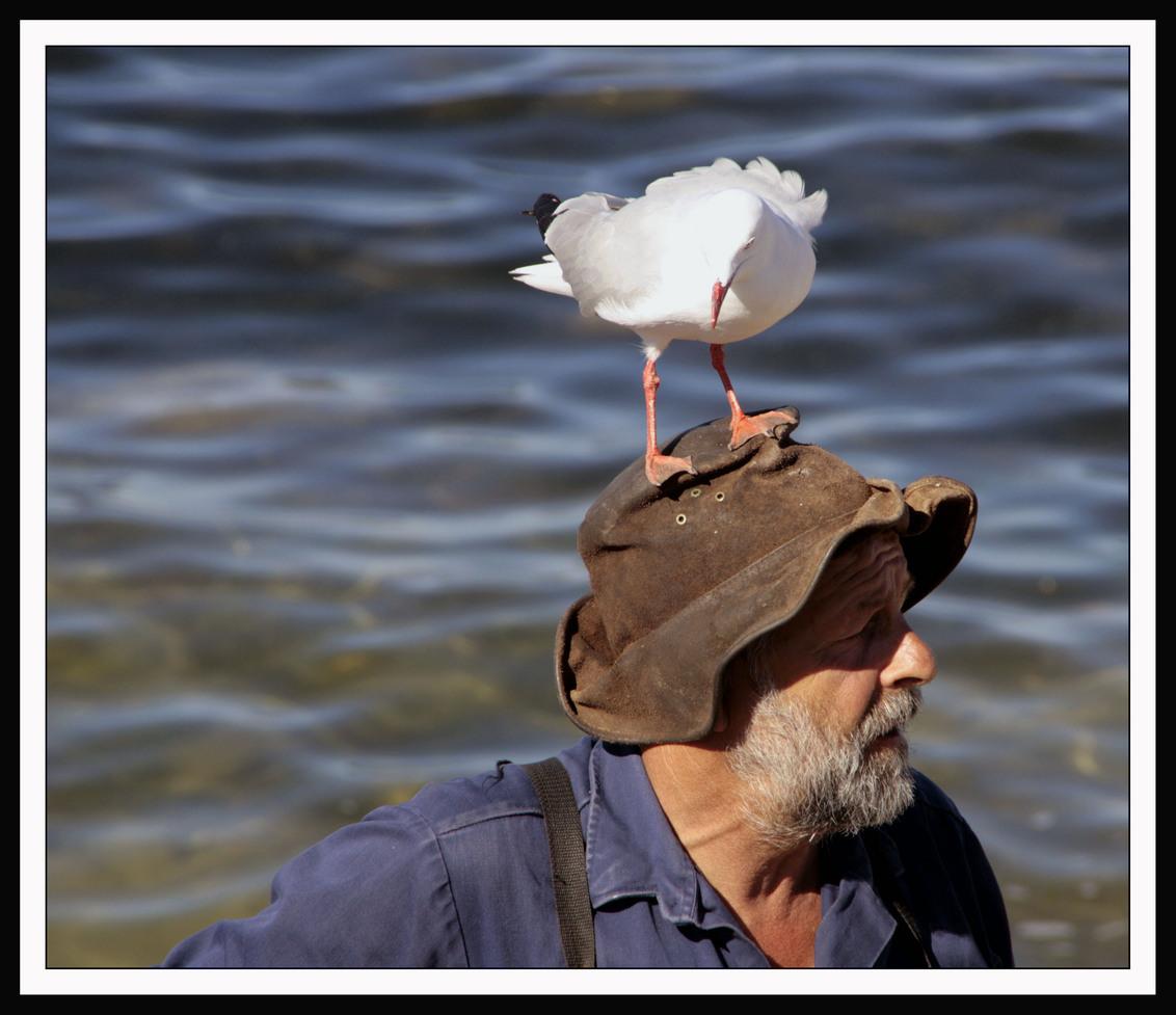 Hoog en droog - Deze foto heb ik gemaakt in Australië, Kangeroo Island. Deze man voert iedere avond de pelikanen en heeft dus emmers vol met vis bij zich. Niet allee - foto door Marije6 op 09-01-2009 - deze foto bevat: zee, meeuw, visser, australi-