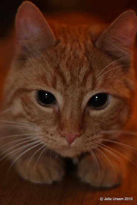 Henk - Henk, de kat van mn broertje = Cute - foto door SchizoDuckie op 09-04-2010 - deze foto bevat: kat, henk