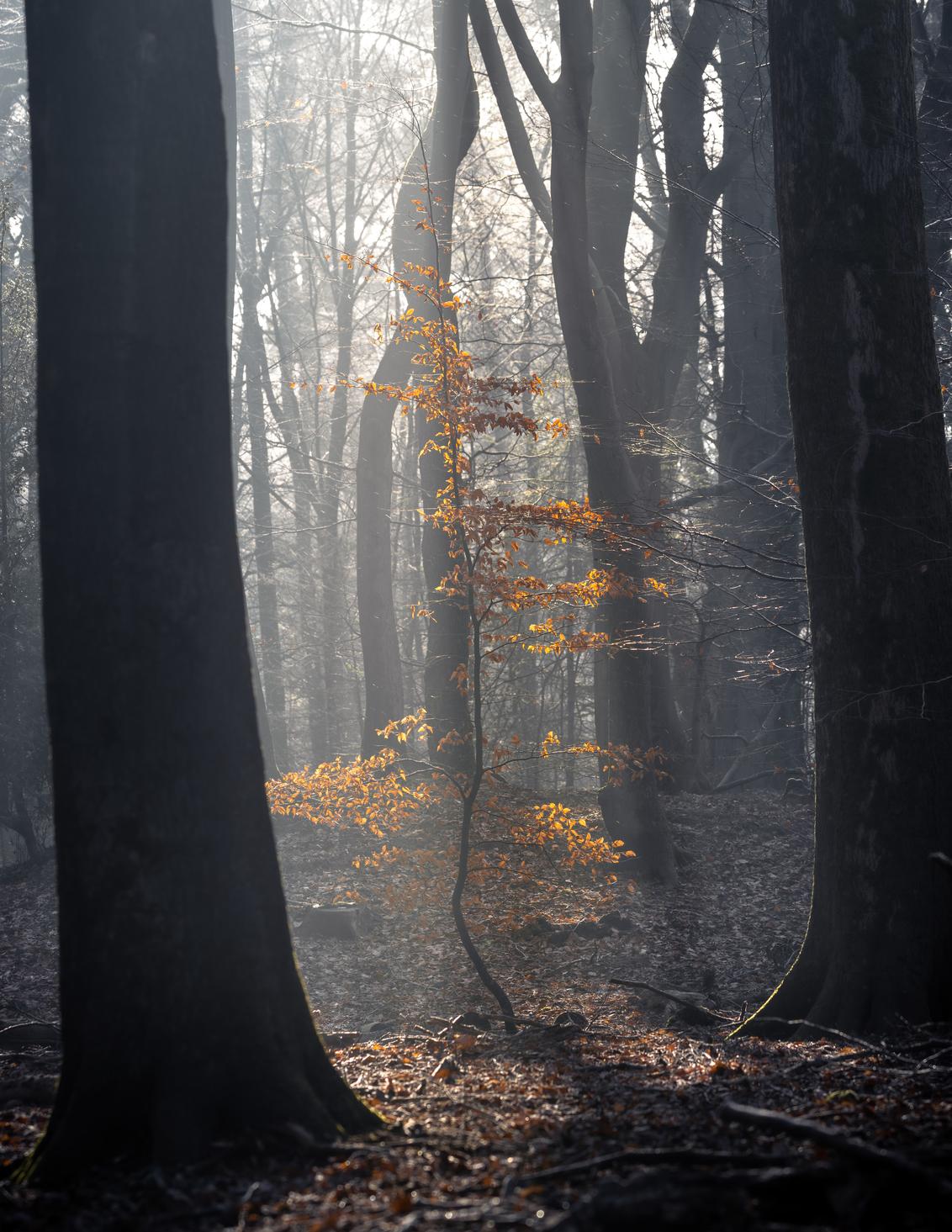 B E T W E E N - - - foto door Hendrik1986 op 02-02-2021 - deze foto bevat: groen, zon, boom, geel, licht, winter, blad, landschap, bos