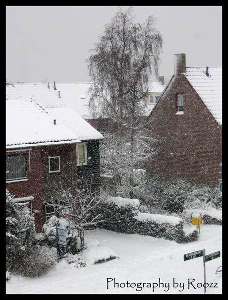 Snowflakes in December