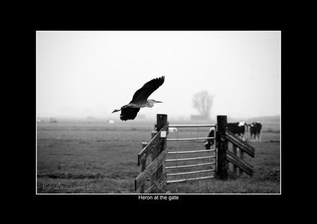 Heron at the gate