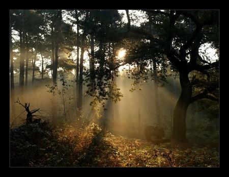 sprookjes bestaan - Een foto van afgelopen zaterdagochtend. Wat kan de herfst toch mooi zijn. Deze vind ik wel sprookjesachtig ......... Groet, Juri - foto door juriheise op 12-10-2010 - deze foto bevat: zon, ochtend, herfst, bomen, oisterwijk
