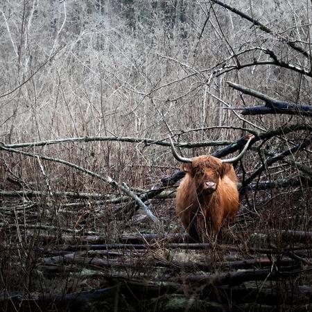 Lost - - - foto door Bakinett op 02-01-2021 - deze foto bevat: macro, kikker, water, uil, meeuw, dierentuin, kitten, libelle, natuur, vlinder, poes, roodborstje, koe, sneeuw, paard, dieren, safari, vogel, vis, huisdier, ree, eekhoorn, hond, gans, eend, zwaan, schaap, vos, buizerd, reiger, koolmees, hert, fuut, zeearend, artis, awd, olifant, kat, aap, watervogel, leeuw, tijger, roofvogel, torenvalk, afrika, wildlife, ijsvogel, jong, emmen, blijdorp
