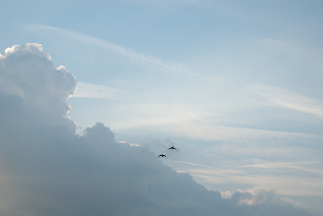 fly away...........