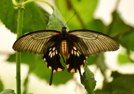 Vlinder?!