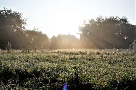 mist and wetgrounds with the sun