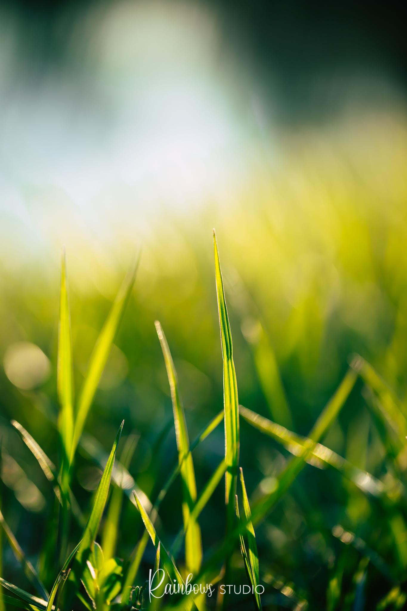 Gras groener aan de overkant  - Is het zo? Is het gras echt groener aan de overkant? Dit gras is wel degelijk groener dan het gras in onze tuin. Maar komt dat door het licht inval?  - foto door kyanivullings op 16-04-2021 - locatie: 3150 Haacht, België - deze foto bevat: gras, groen, dof, bokeh, macro, detail, natuur, landschap, buiten, zon, water, mensen in de natuur, fabriek, natuurlijk landschap, terrestrische plant, gras, lucht, grasland, weide, vochtigheid