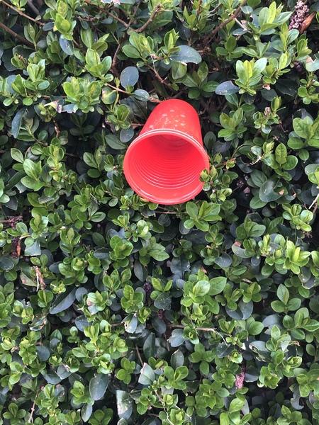 Rood..... - Afval - foto door Foto2801 op 11-04-2021 - deze foto bevat: rood, natuur, afval, bloemblaadje, fabriek, gras, bodembedekker, struik, fruit, kunst, bloeiende plant, eenjarige plant, tinten en schakeringen