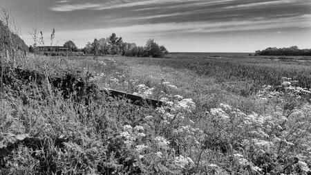 Landschap - Foto spreekt m.i. voor zich. - foto door jandehaan_zoom op 13-04-2021 - locatie: Texel, Nederland - deze foto bevat: wolk, lucht, fabriek, ecoregio, natuurlijke omgeving, natuurlijk landschap, boom, hout, land veel, zwart en wit