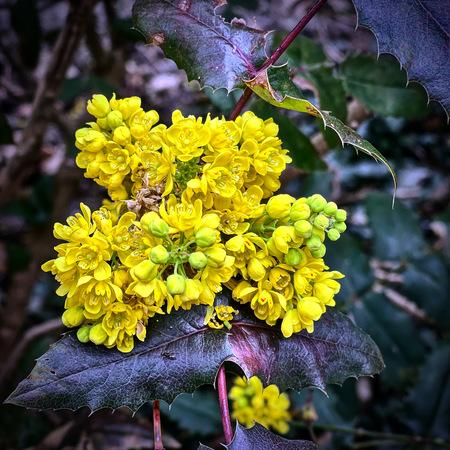 Yellow - Lente - foto door Bierman67 op 12-04-2021 - deze foto bevat: bloem, fabriek, blad, plantkunde, bloemblaadje, afdeling, geel, bloeiende plant, boom, geleedpotigen
