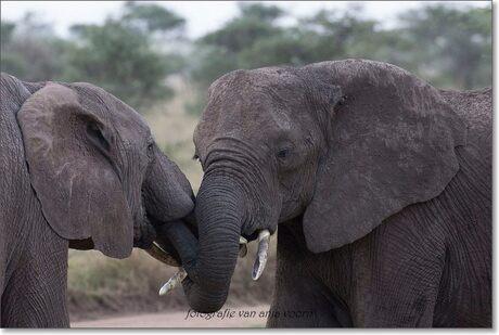 friends in Afrika
