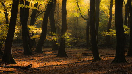 Rustpunt in het herfstbos