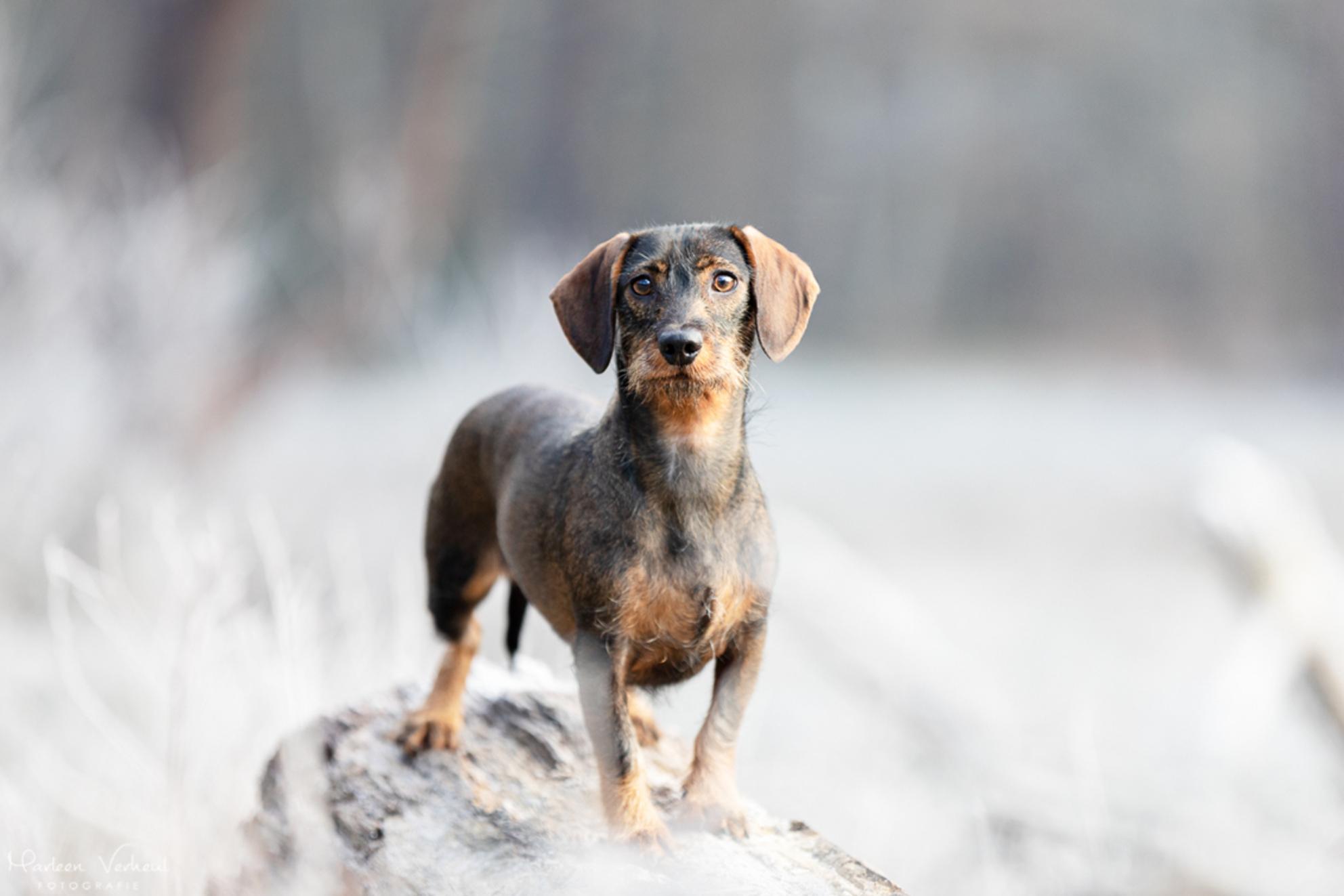 Winterplaatje - Mika in een winters landschap - foto door MarleenVerheulFotografie op 14-01-2021 - deze foto bevat: dieren, huisdier, hond, hondenfotografie, hondenfotograaf