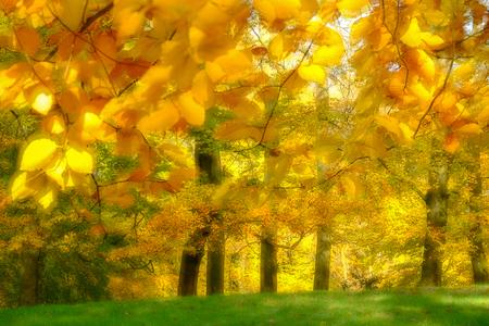 Herfst - Experiment met dubbele belichting - foto door burrybrink op 09-12-2019 - deze foto bevat: natuur, licht, herfst, landschap, bos, bomen