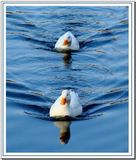 Synchroon zwemmen
