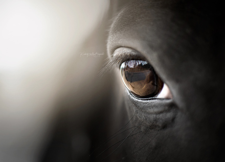 My beautiful horse.