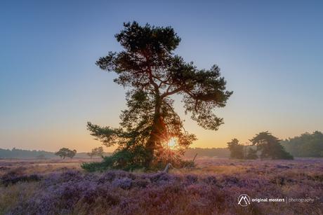 Lonesome Tree...