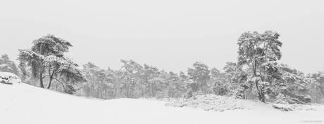 Winterwonderland....