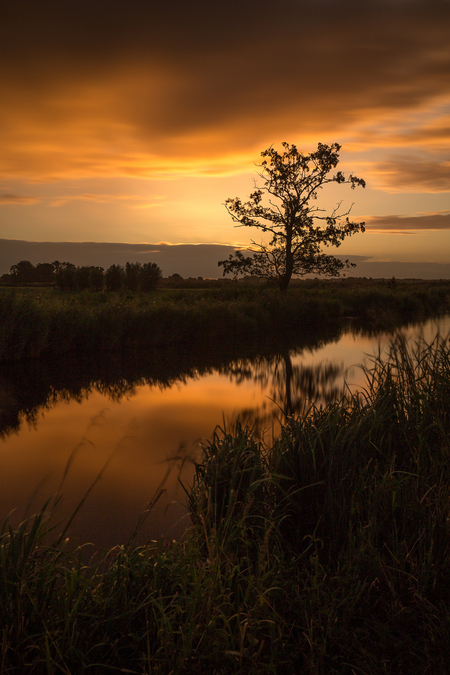 Gouden uurtje - Gouden uurtje met een gouden boom...;) - foto door SvanRijmenam op 14-09-2015 - deze foto bevat: lucht, wolken, water, natuur, spiegeling, landschap, zonsopkomst, bomen, rivier, lange sluitertijd