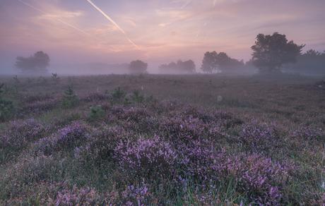 'a fairy sunrise'