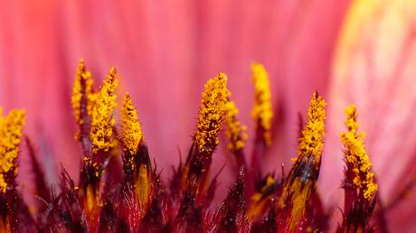 Inside a flower..