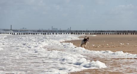 Hond speelt met schuim op het strand