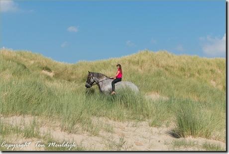 Aan het strand in Westerschouwen-7077