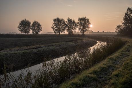 Mist landschap Rijnstrangen