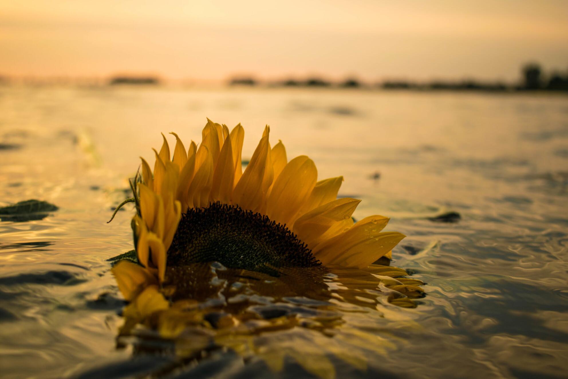 Sinking The Love - - - foto door Rsnoekphotography op 19-10-2016 - deze foto bevat: zon, zee, bloem, water, natuur, geel, zonsondergang, landschap, tegenlicht, zomer, voorjaar, meer - Deze foto mag gebruikt worden in een Zoom.nl publicatie