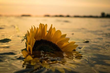 Sinking The Love - - - foto door Rsnoekphotography op 19-10-2016 - deze foto bevat: zon, zee, bloem, water, natuur, geel, zonsondergang, landschap, tegenlicht, zomer, voorjaar, meer