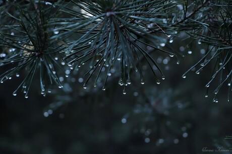 Christmas Raindrops