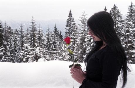 De roos in winter
