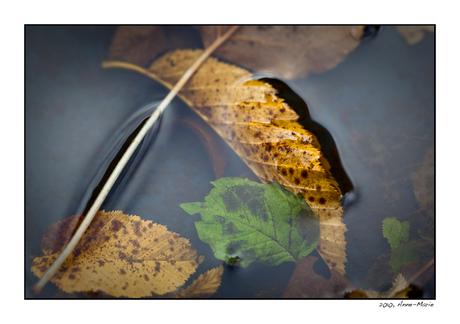 Herfstbladeren in water