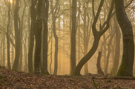 Mistige dansende bomen