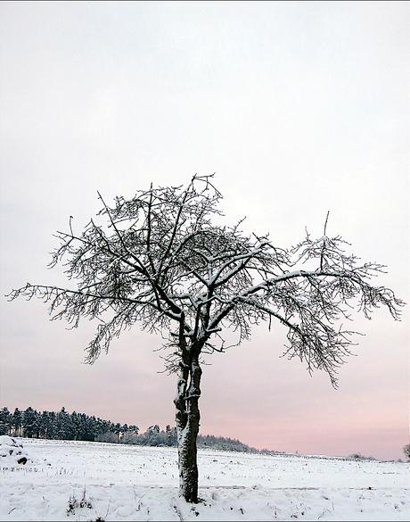 Solitair In De Sneeuw