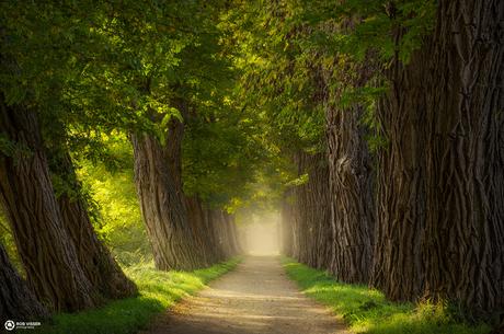 Acacia alley