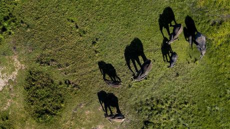Schaduw van olifanten